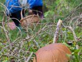 bigstock-Edible-Boletus-Edulis-Mushroom-30841595