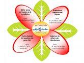 Fleurs-mandats-actions-page-001